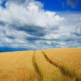 Corteva Agriscience подвела итоги Всероссийского конкурса урожайности «Пионер Максимум»