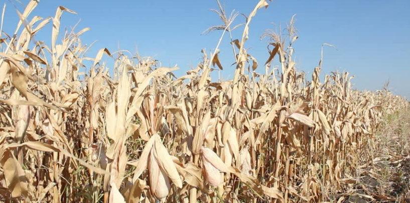 Страховщики выплатили аграриям России 2,6 млрд рублей за погибший урожай