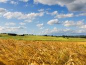 НСА разработал цифровой Паспорт рисков сельского хозяйства регионов России