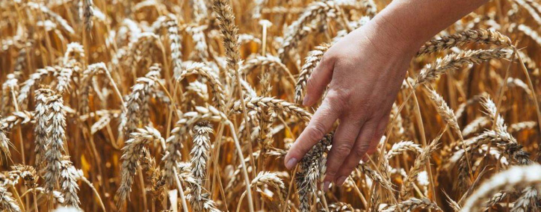 Корней Биждов, президент НСА: за пять месяцев рынок агрострахования с господдержкой в России составил 2,4 млрд рублей, рост – 35%