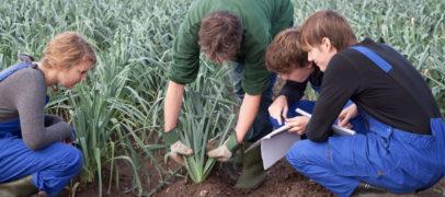 Россельхозбанк рассказал о возможностях летней занятости студентов в АПК