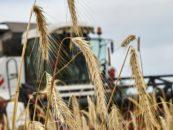 Минсельхоз Удмуртии рассматривает новые меры для стабилизации рынка зерна в республике