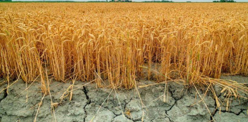 Корней Биждов: весенний прогноз НСА подтвердился и на особом контроле – засуха в Татарстане, Башкирии и Оренбургской области