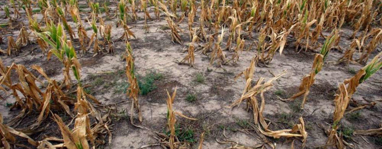 НСА: снижение урожая из-за засухи может произойти в хозяйствах 14 регионов