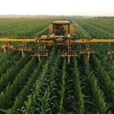 Corteva Agriscience планирует увеличить объемы производства семян Pioneerв России